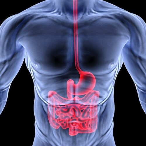 The Gut and How Thyroid Controls Digestion