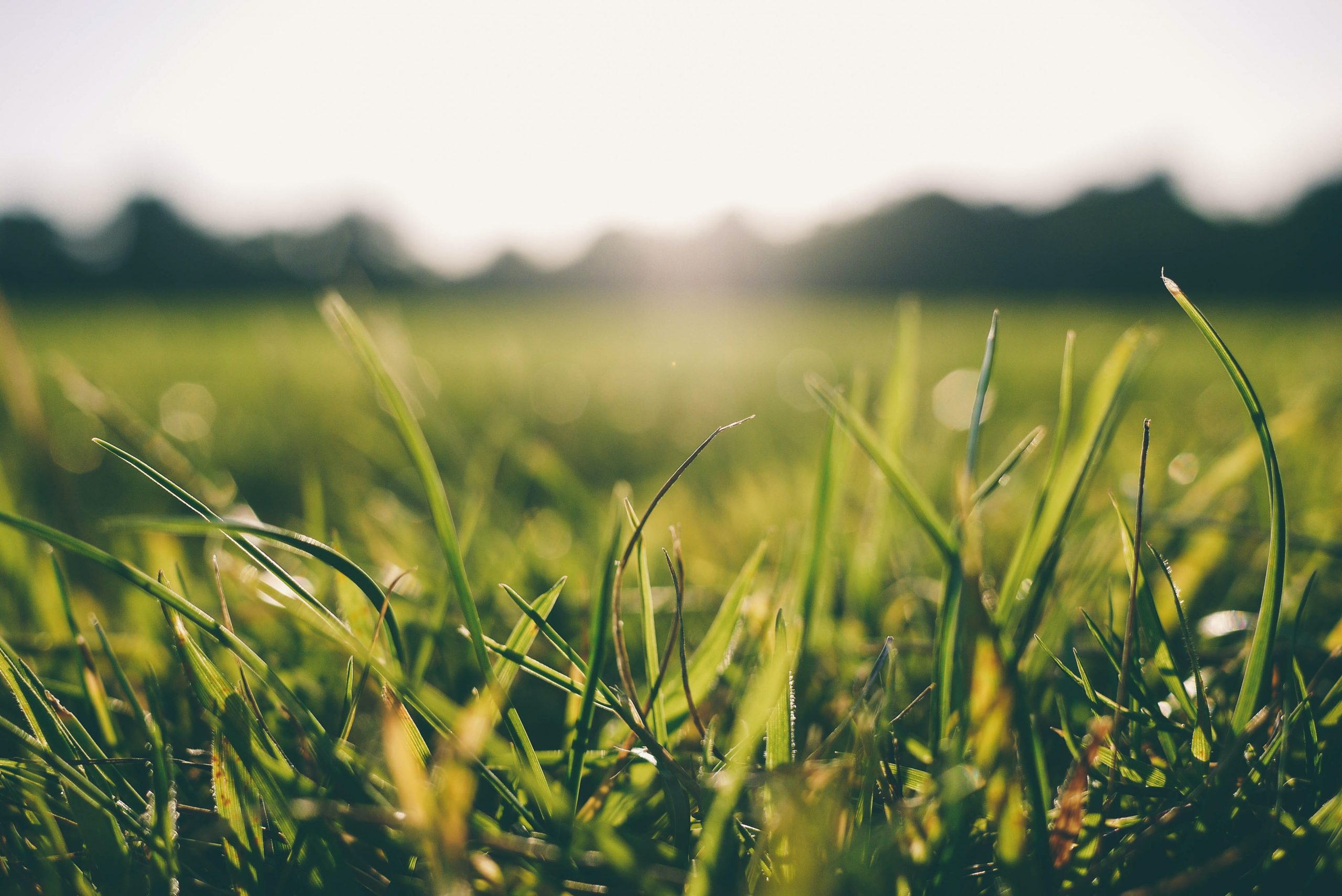 Sunlight on grass; what you should know about vitamin D.